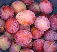 https://upload.wikimedia.org/wikipedia/commons/thumb/1/16/Prunus_domestica_%27Reine_Victoria%27.jpg/200px-Prunus_domestica_%27Reine_Victoria%27.jpg